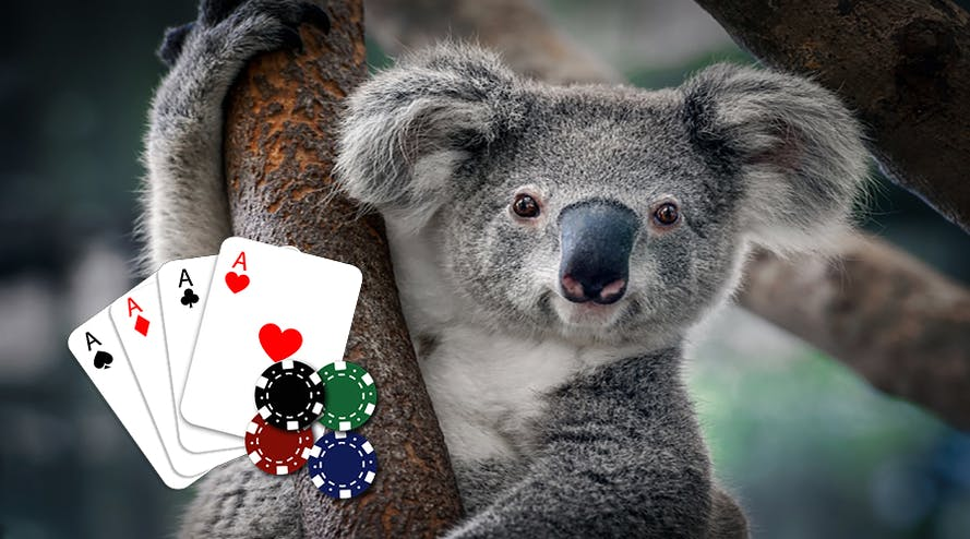 Australian Poker Community joins the wildlife fundraising movement